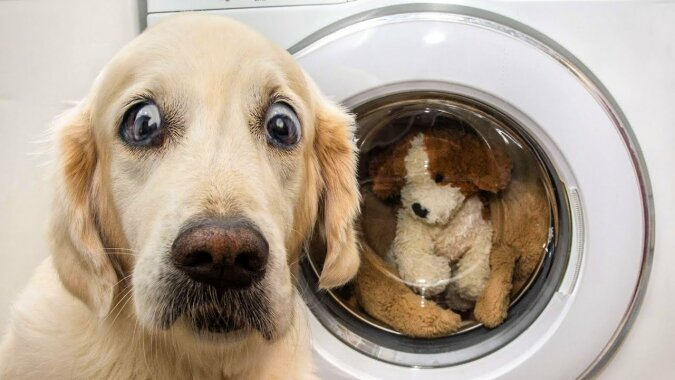 """""""Man kann alles verzeihen"""": Haustiere, die ertappt und beschämt wurden"""