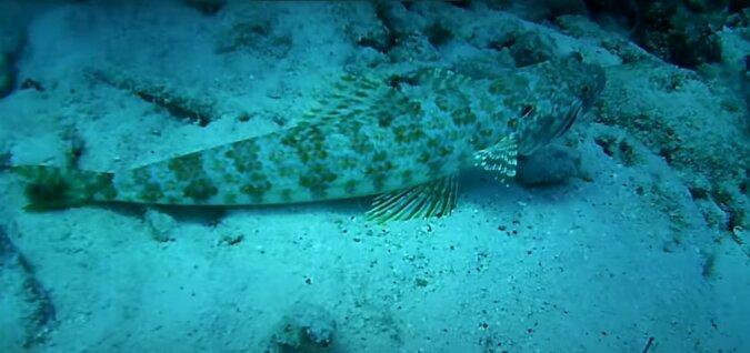 Unterwasser. Quelle:Screenshot YouTube
