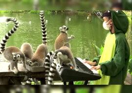 Das Mädchen spielt Musik für Tiere. Quelle: Screenshot YouTube