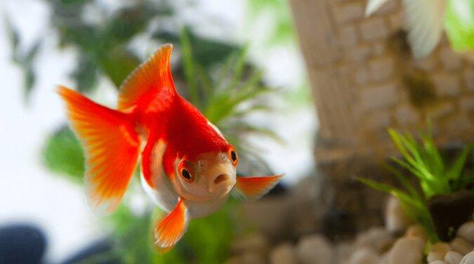 Ein Fisch. Quelle: ivetta