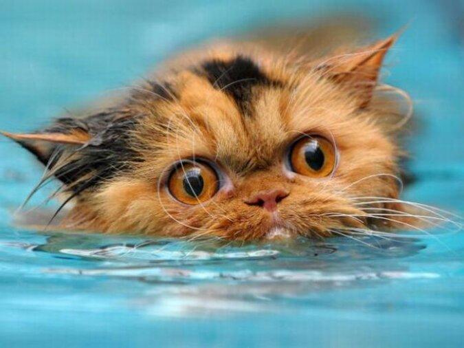 Die Katze sah das Meer zum ersten Mal und war unzufrieden