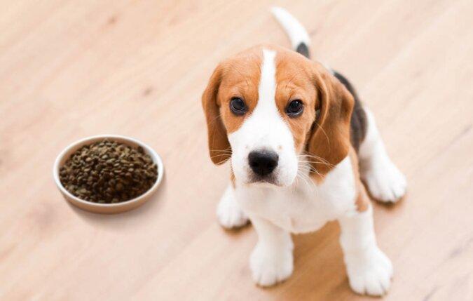 Ein Mann sah einen Hund, der irgendwohin eine Schüssel mit Futter trug: Nachdem er ihm folgte, erkannte er den Grund