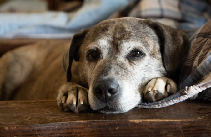 Dorfbewohner kümmern sich gemeinsam um einen alten Hund, nachdem seine Besitzerin die Welt verlassen hat