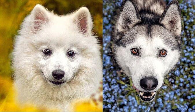 Hund in Blumen.Quelle:dailymail.co.uk