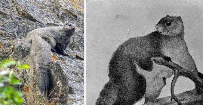 Das tibetische wollige fliegende Eichhörnchen. Quelle:dailymail.co.uk