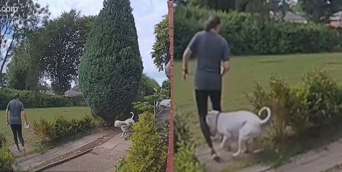 Der verspielte Hund. Quelle:dailymail.co.uk