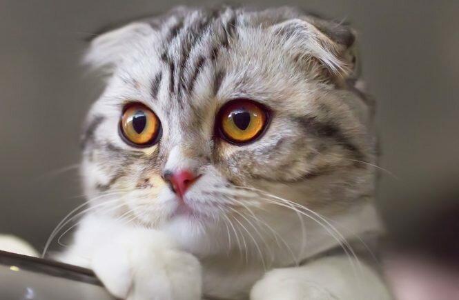 """""""Unterstützung eines Freundes"""": Das Mädchen musste die Katze zum Unterricht mitnehmen, weil sie alleine zu Hause nicht bleiben wollte"""