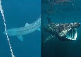 Der Hai. Quelle:dailymail.co.uk