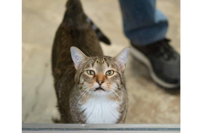 Die Katze wurde in Einzelzelle gesteckt, weil sie einen Ausbruch organisiert hatte, aber sie entkam auch daraus