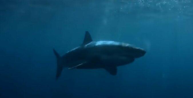 Ein Hai. Quelle: Screenshot YouTube