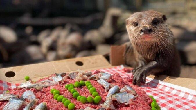 Otter und Leckereien. Quelle: tourister