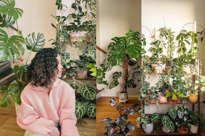 Zimmerpflanze. Quelle:dailymail.co.uk