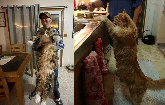 Die echte Katzezilla. Quelle:dailymail.co.uk
