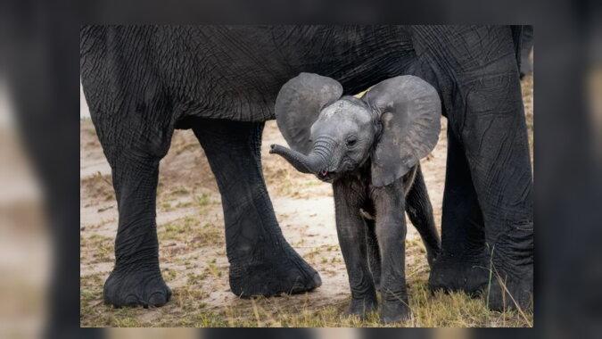 Der kleine Elefant. Quelle: goodhouse