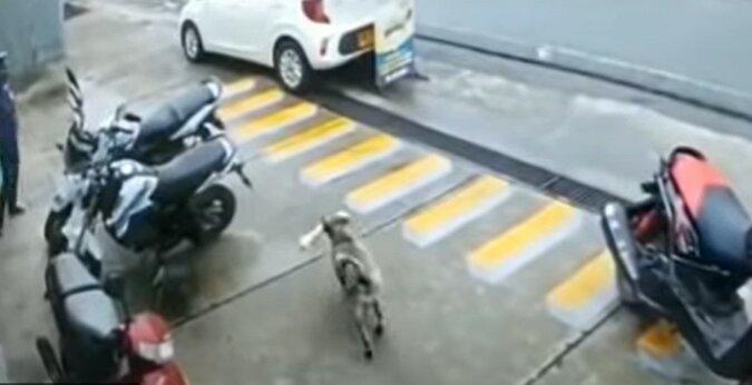 Der Hund läuft weg. Quelle: Screenshot YouTube