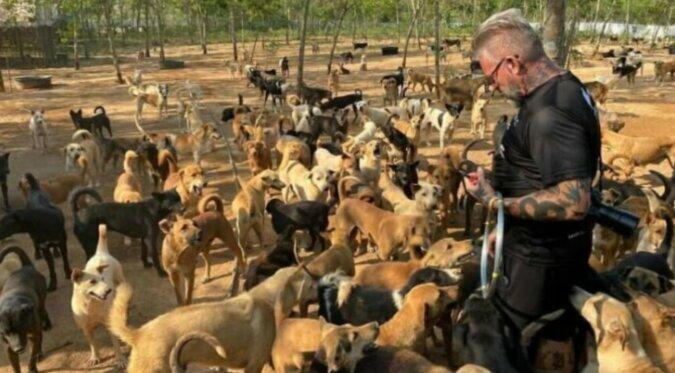 Viele Hunde und ein Mann. Quelle: boredpanda.com