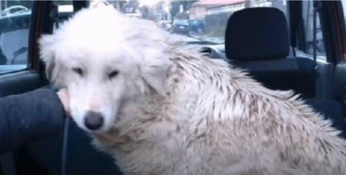 Hund. Quelle: Screenshot YouTube