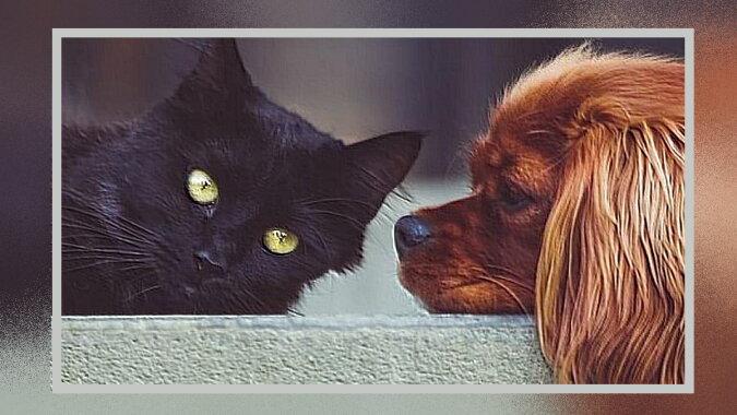 Eine Katze und ein Hund. Quelle: dailyadvent