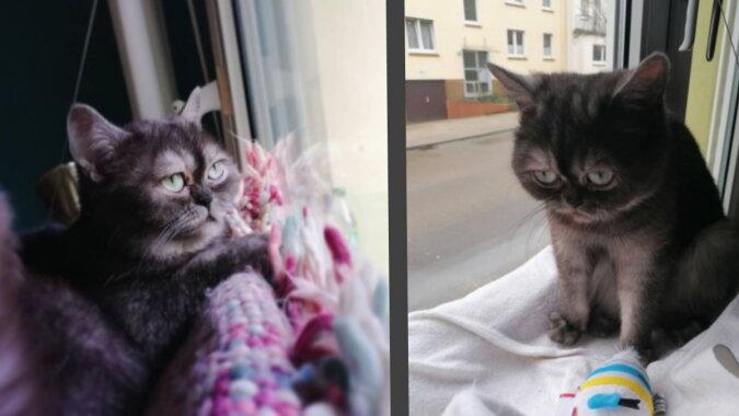 Zu besonders, um ein Zuhause zu finden: eine junge Frau nahm eine düstere Katze aus einem Tierheim auf