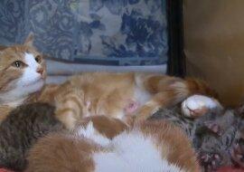 Katze und Kätzchen. Quelle: Screenshot YouTube