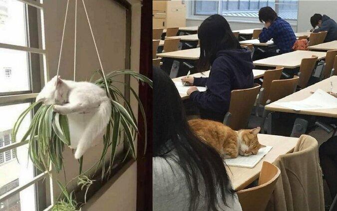 Schlafende Katzen. Quelle:dailymail.co.uk