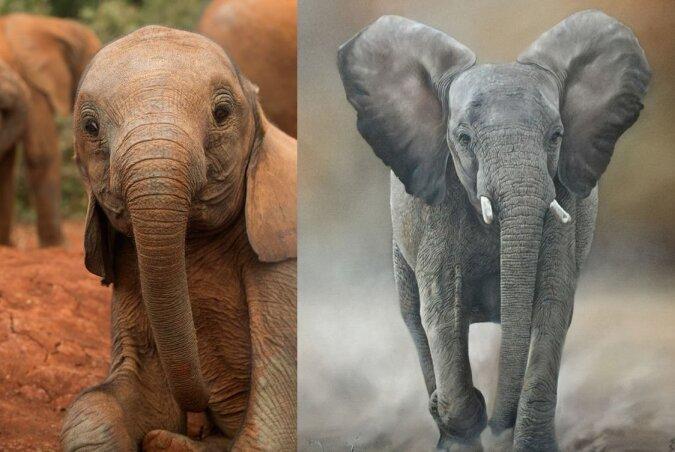 Gruppe junger Elefanten. Quelle:dailymail.co.uk