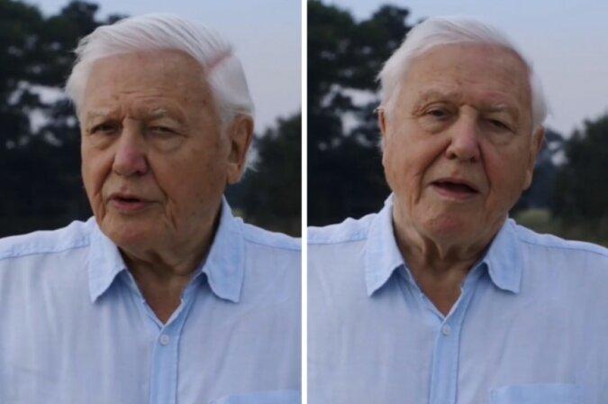 """""""Willkommen"""": Der 94-jährige Sir David Attenborough tritt Instagram offiziell bei, und die Zahl von seinen Followers wächst sehr schnell"""