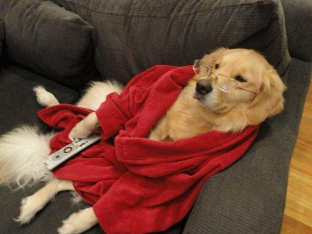 """""""Zu kalt"""": Der Hund frierte so sehr, dass er entschied, sich im Schlafrock seiner Besitzerin aufzuwärmen"""