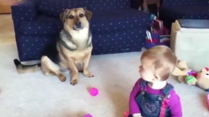 Ein Hund und ein Kind. Quelle: Screenshot YouTube