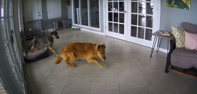 Hunde. Quelle: Screenshot YouTube