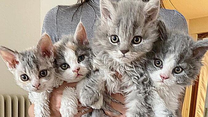 Kätzchen. Quelle: bigpicture