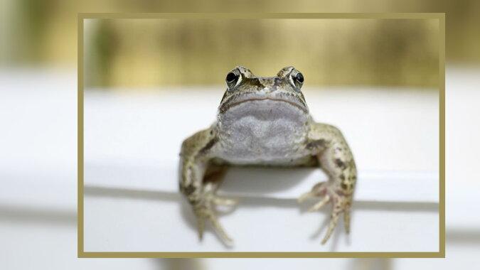 Ein Frosch. Quelle: severpress.com