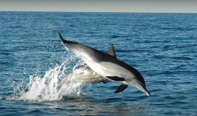 Delfine. Quelle: Screenshot YouTube