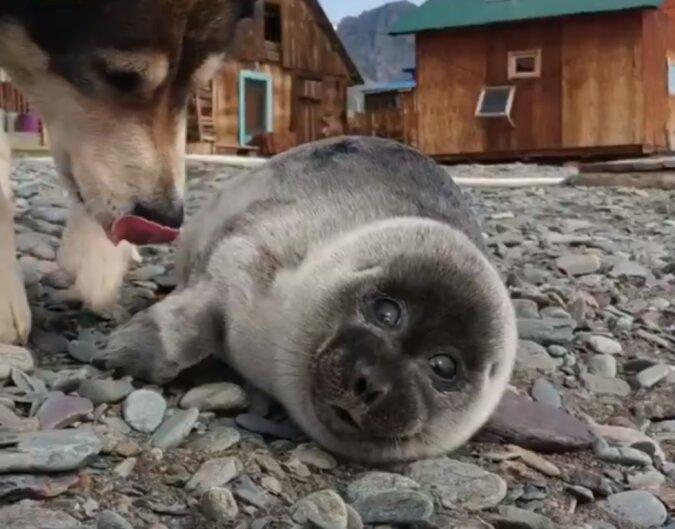 Der Hund rettete am Seeufer eine Ringelrobbe und sie wurden unzertrennliche Freunde