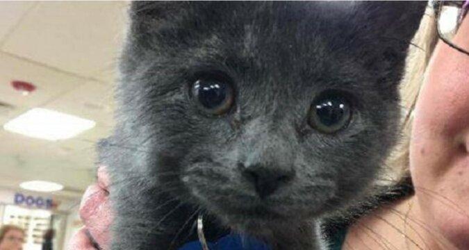 Schönes Kätzchen. Quelle: erabaru