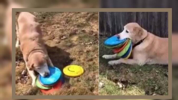 Der Hund mit Frisbee. Quelle: twitter