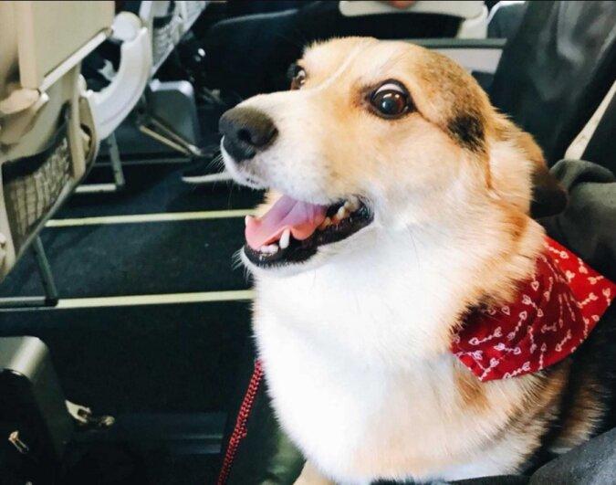 Am Flughafen brach ein Hund aus den Händen seine Besitzerin plötzlich aus und eilte zu einem Fremden