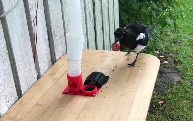 """""""Mülltrennung"""": Ein Mann erfand einen ungewöhnlichen ökologischen Vogelhäuschen, die Einzelheiten sind bekannt geworden"""