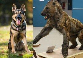 Ein Hund. Quelle:dailymail.co.uk