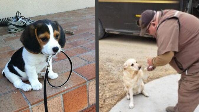 Kuriere und Hunde. Quelle: pinterest