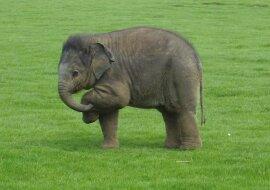 """""""Der Kleinste"""": Während eines Familienspaziergangs steckte ein Elefantenbaby im Wald fest"""