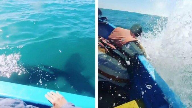 Ein großes Glück: Ein Grauwal begrüßte die Menschen und bespritzte vollständig ihr Boot