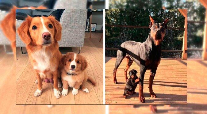 Hunde. Quelle: lemurov.net