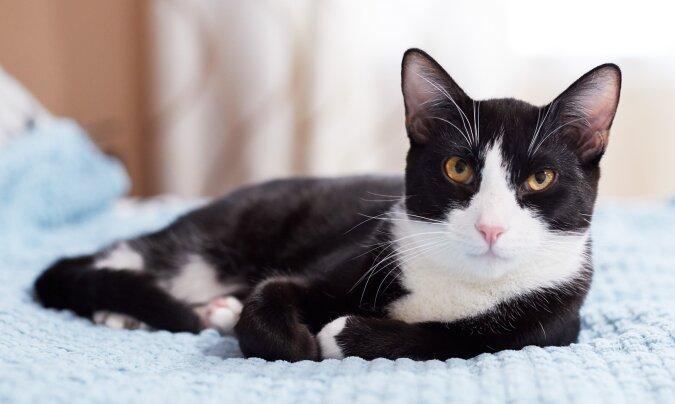 Die Katze. Quelle:dailymail.co.uk