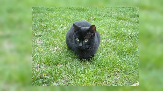 Eine schwarze Katze. Quelle: wikipedia