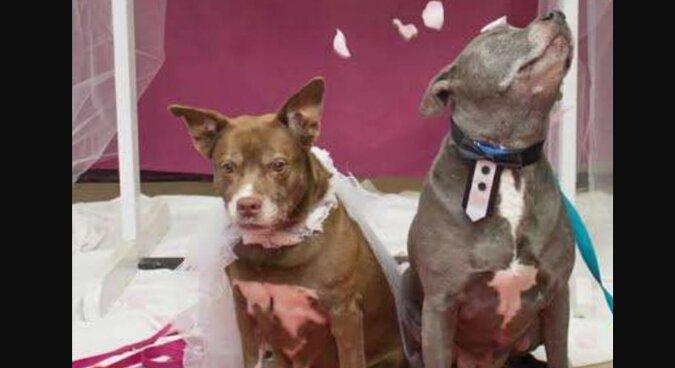 Zwei Hunde wurden auf der Straße gefunden: es stellte sich heraus, dass sie nicht getrennt werden konnten, das Tierheim fand einen Ausweg