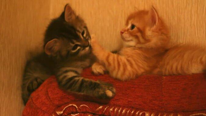 Die Ärzte sahen eine Katze vor der Tür des Krankenhauses: Sie hielt in den Zähnen einen Patienten, ein Kätzchen