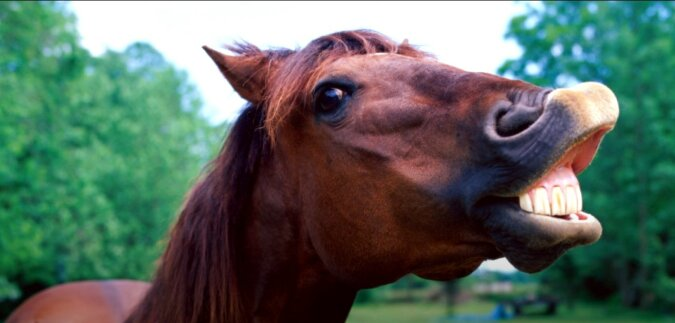 Pferd. Quelle: Screenshot YouTube
