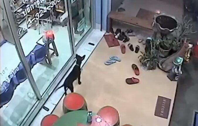Kluger verlorener Hund kam in die Tierklinik und bat darum, nach Hause gebracht zu werden