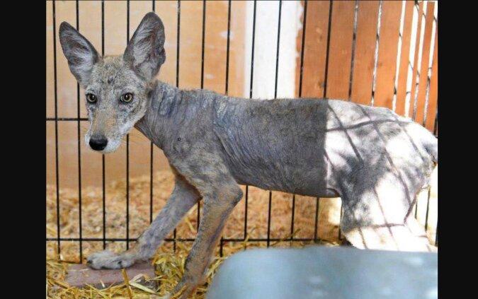 Menschen retteten einen Hund im schlechten Zustand, stellten aber später fest, dass es sich gar nicht um einen Hund handelte